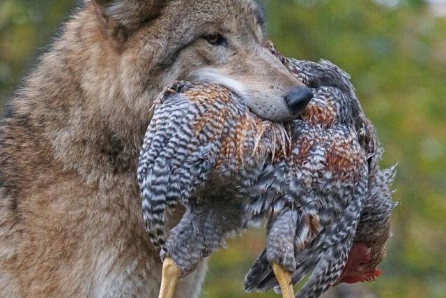 Predatori e animali pericolosi