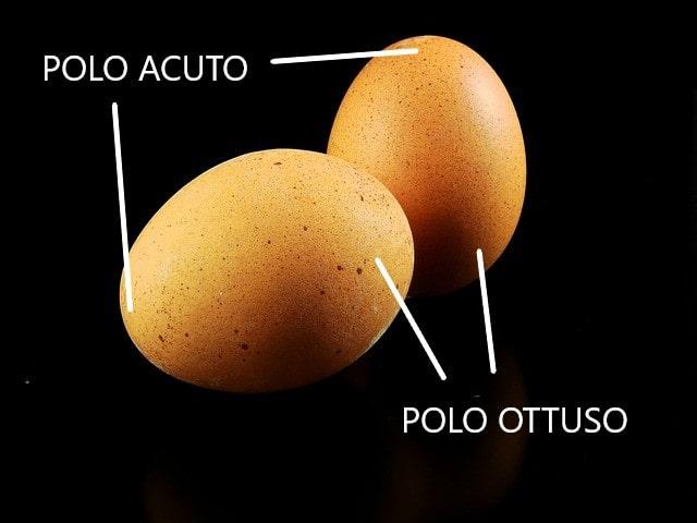 Come sono le uova