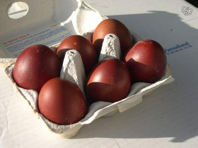 uova di marans