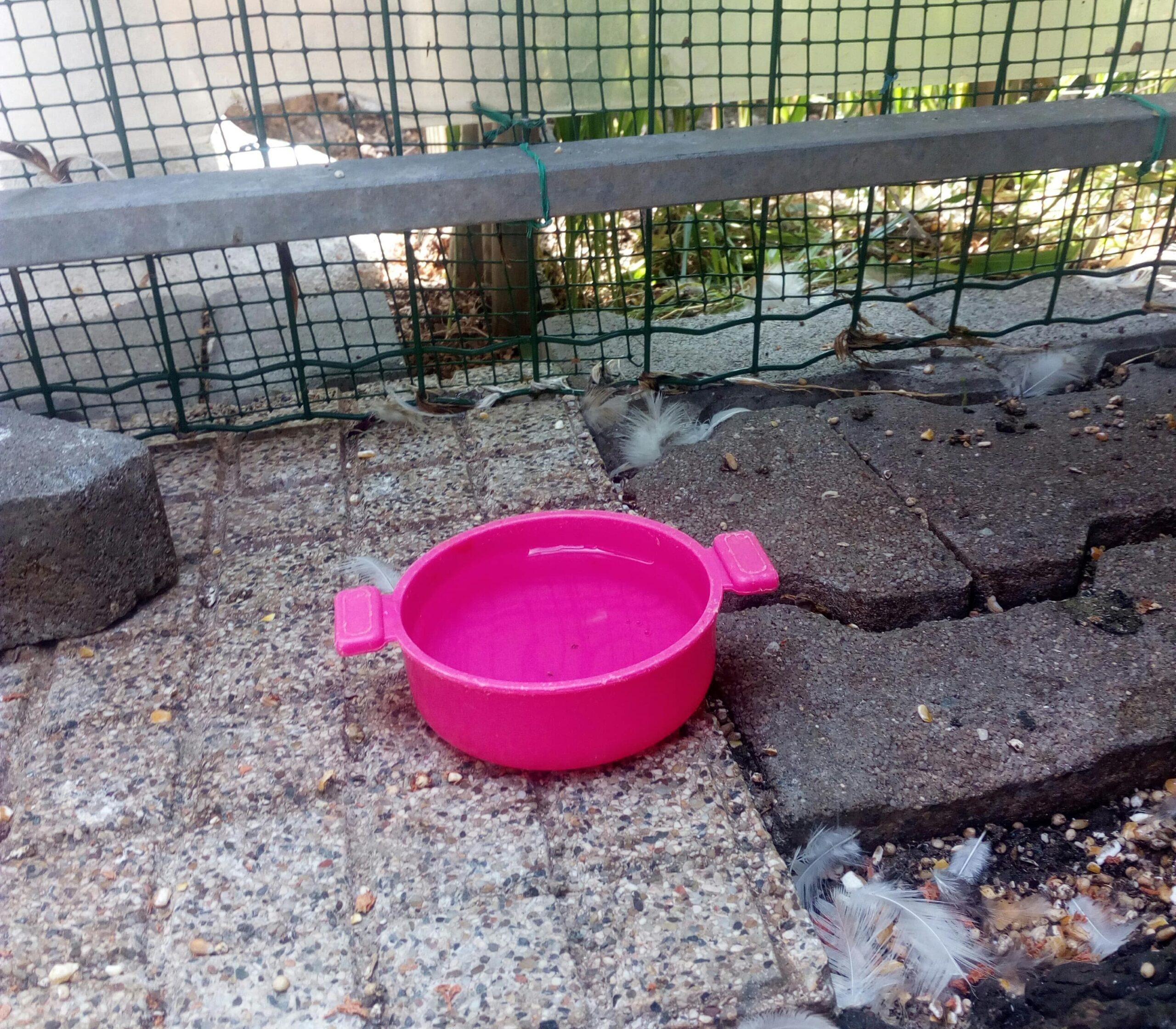 ciotola d'acqua anti annegamento per pulcini fai da te