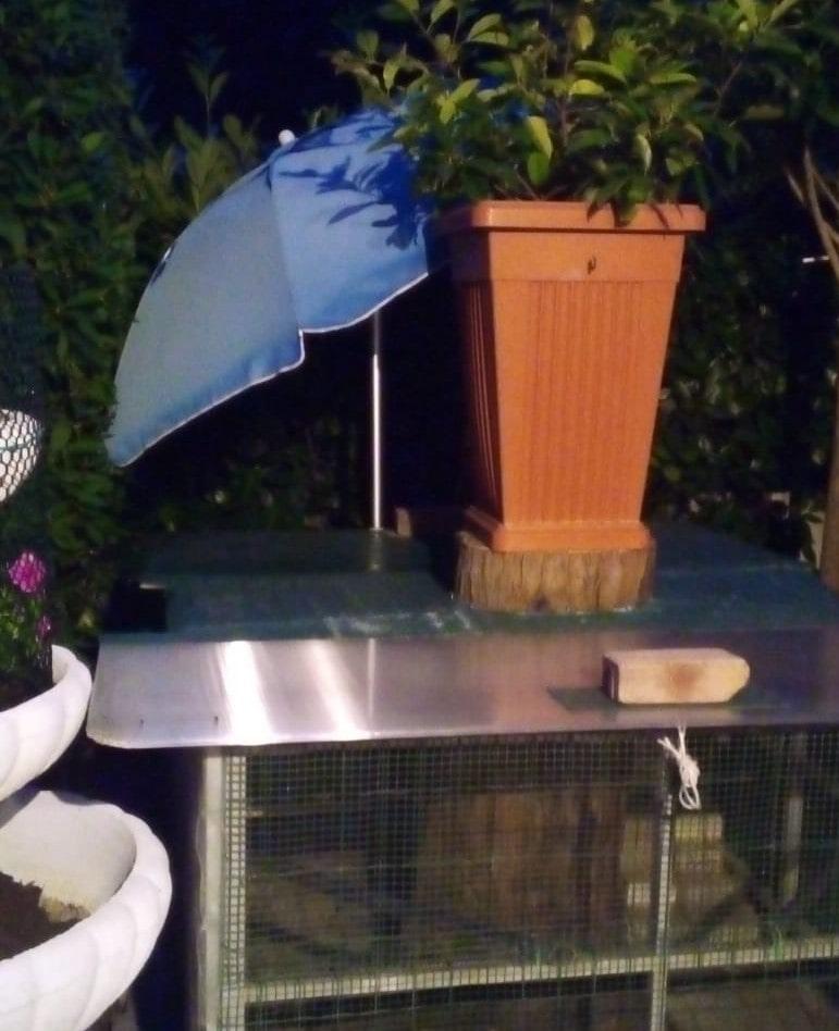 ombrellone per galline