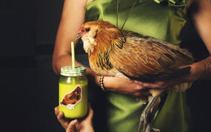 Come prendere una gallina